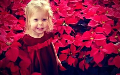 Poinsettias to Thank Donors